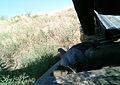 Juniper Dunes Critter Cam (21307260428).jpg