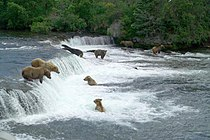 Katmai National Park and Preserve Brooks Falls.jpg