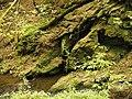 Kavinský potok (11).jpg