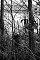 Keep Out Tree.JPG