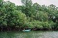 Kekayaan Hutan Mangrove di Tepian Sungai Bintuni.jpg