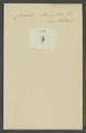 Kend - Print - Iconographia Zoologica - Special Collections University of Amsterdam - UBAINV0274 029 01 02 0003.tif