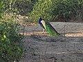 Keoladeo Birds.jpg