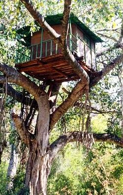 Treehouse Build Kits