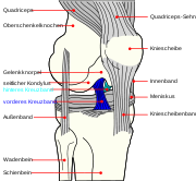 Knee diagram-de ACL PCL
