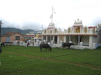 Cattle in religion and mythology - Cattle at a temple, in Ooty India