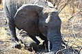 Kruger Park, South Africa - panoramio (6).jpg