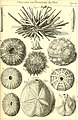 L'histoire naturelle éclaircie dans deux de ses parties principales, la lithologie et la conchyliologie - dont l'une traite des pierres et l'autre des coquillages - ouvrage dans lequel on trouve une (14758859426).jpg