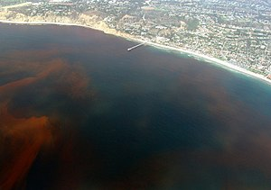 Dead zone (ecology) - Dead zones are often caused by the decay of algae during algal blooms, like this one off the coast of La Jolla, San Diego, California.