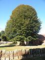 La Neuville-d'Aumont arbre.JPG