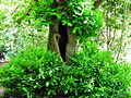 La raja del árbol - panoramio.jpg