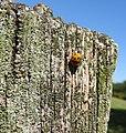 Ladybird (19696266928).jpg