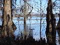 Lake Miccosukee Rococo Ramp 8.JPG