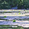 Lake Minnetonka (2622768993).jpg