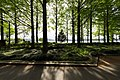 Lakeside Of Metasequoia (153115901).jpeg