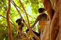 Langur with its watchful baby.jpg