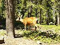 Lassen National Park (32857755206).jpg