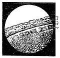 Le pain et la panification - Fig. 11.jpg