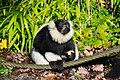 Lemur (26245347549).jpg