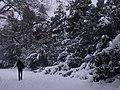 Letenské sady - panoramio (40).jpg