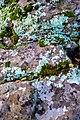 Lichen (24287157589).jpg