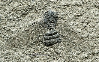 1849 in paleontology - Formica imhoffii