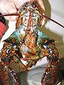 Lobster 09.jpg