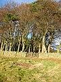 Long Plantation - geograph.org.uk - 303184.jpg