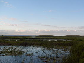 Long Point Marshes 2.jpg