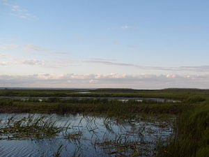 The marshes of Long Point, as seen from the Provincial Park.