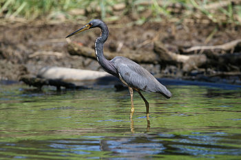 MC Heron Costa Rica