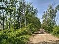 MD.BL.Bălți - sistemul de perdele forestiere de protecție - apr 2018 - 08.jpg