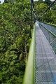 MacRitchie Nature Trail, Singapore; December 2014 (07).jpg