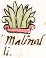 Malīnalli - glyphe 1.jpg