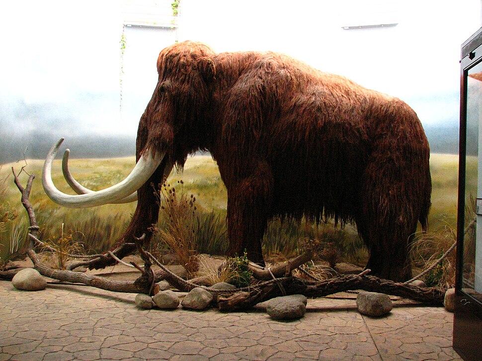 Mammoth-ZOO.Dvur.Kralove