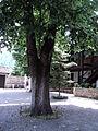 Manastir Presveta Bogorodica Matka (90).JPG