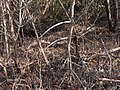 Mangroves at West Lake^ - panoramio.jpg