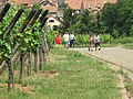 Marche gourmande 22-05-2011 - panoramio.jpg