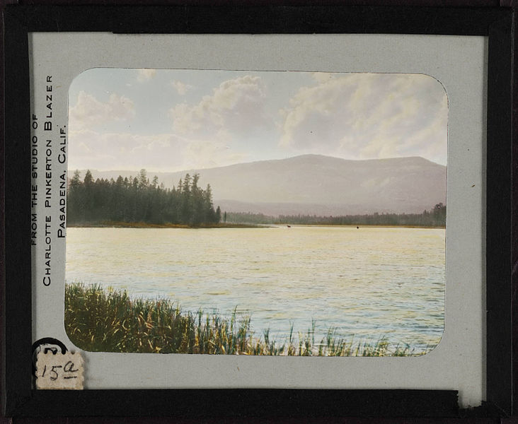 File:Marshy point with two moose in the distance. 15a.jpg