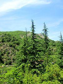 Matka Canyon 124.JPG