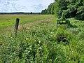 Meadows, Hartmannsdorf (1).jpg