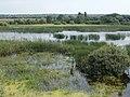 Merzse Marsh Nature Reserve from bird watching lookout, Rákoshegy, 2016 Hungary.jpg