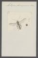 Metopius - Print - Iconographia Zoologica - Special Collections University of Amsterdam - UBAINV0274 046 03 0061.tif