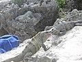 Mexico yucatan - panoramio - brunobarbato (15).jpg