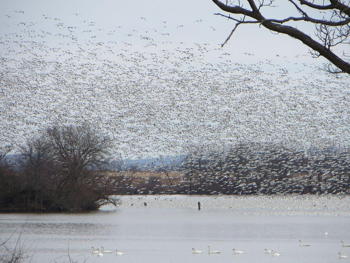 Middle Creek Wildlife Management Area