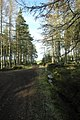 Millbuie Forest track - geograph.org.uk - 759412.jpg