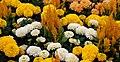 Mixed flowers - yellow and white (5842875705).jpg