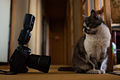 Miyako vs Nikon D4 (8561176364).jpg