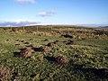 Molehills on Mynydd Melyn - geograph.org.uk - 513901.jpg