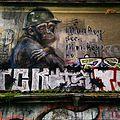 Monkey See, Monkey Do.jpg